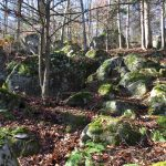 Moss-covered rocks on a forest hillside, covered in fallen deciduous tree leaves
