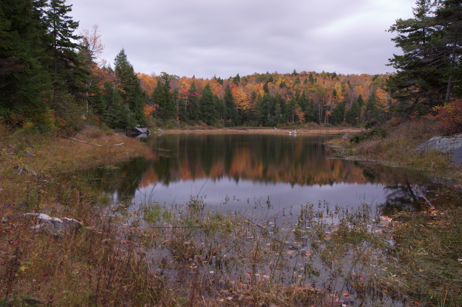 Swamp in foreground, surrounded by autumn trees in the background, under a cloudy sky