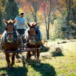 Two horses pull a man in a tractor across a field. Autumn trees in background