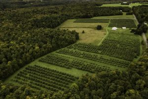 Landscape photo of apple orchard in summer