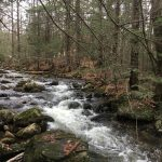Roaring Roberts Meadow Brook in forest