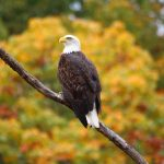 2016 Fall Photo Contest: Hilltown Flora & Fauna